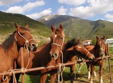 cavalli del Catria