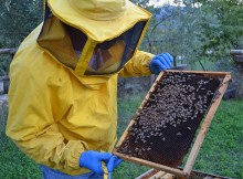 apicoltura-gallery04
