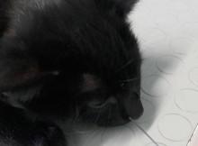 foto postata dal dottor Castellani di un gatto ferito