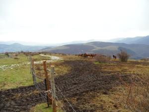 foto1 (1)