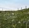 Prati fioriti, alcune meraviglie del monte Catria