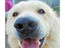 Campagna sociale adozione cani