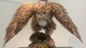 Gola del Furlo, Museo del Territorio