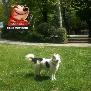 Festa del Cane Meticcio_Jolly